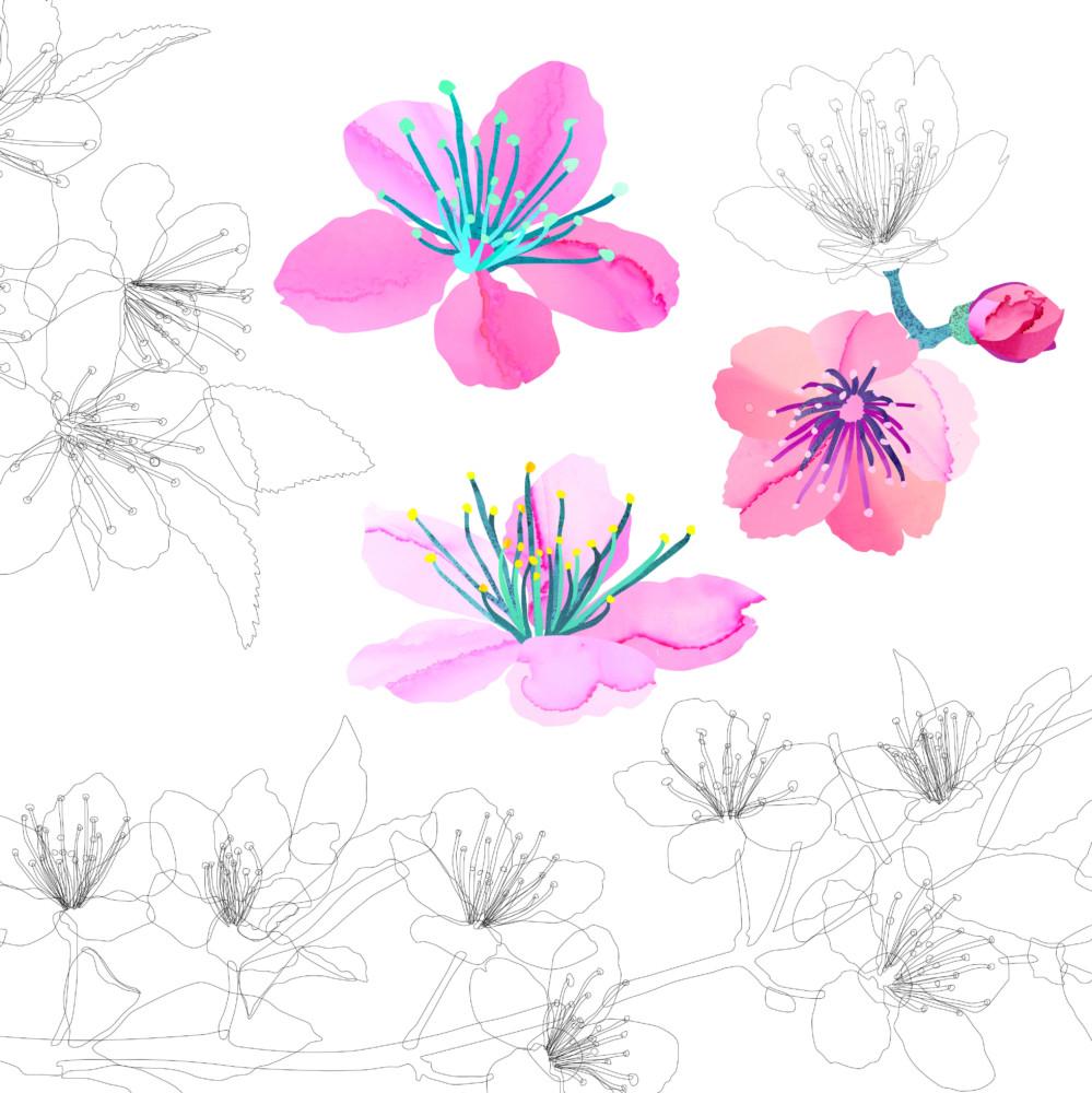 Utuliini Toukokuun kirsikankukat